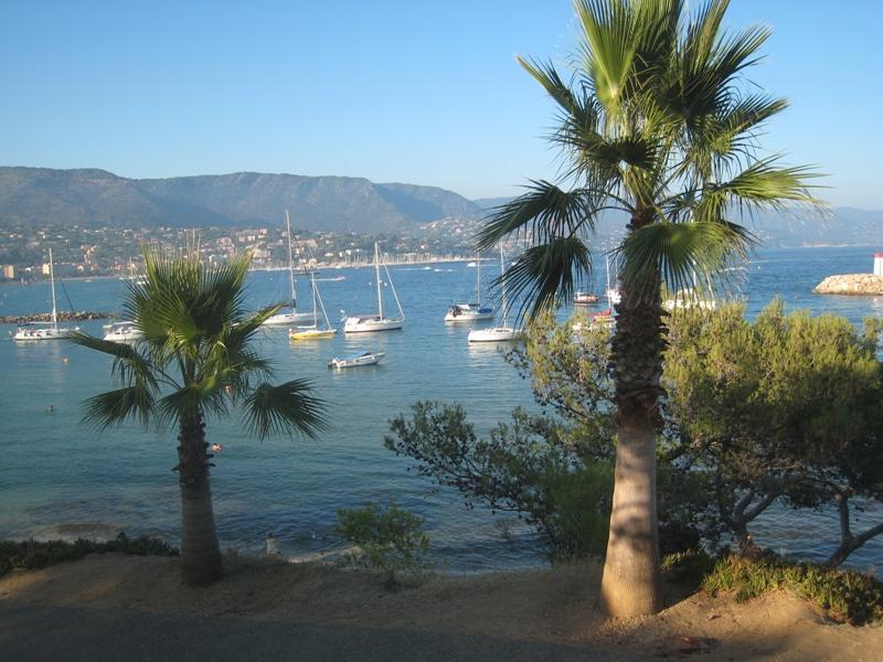 palmier sur plage bormes